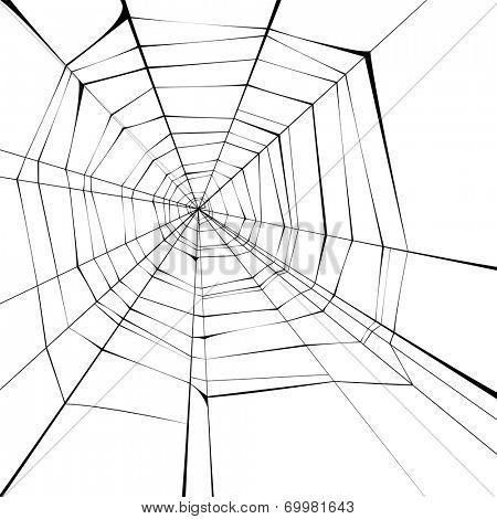 black spider web over white background