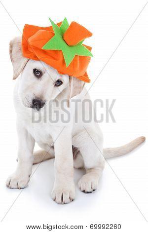 Thanksgiving Pumpkin Dog