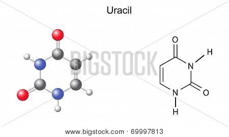 Chemical structural formula and model of uracil (RNA nitrogen base), illustration,  isolated on white background, vector, eps8 poster
