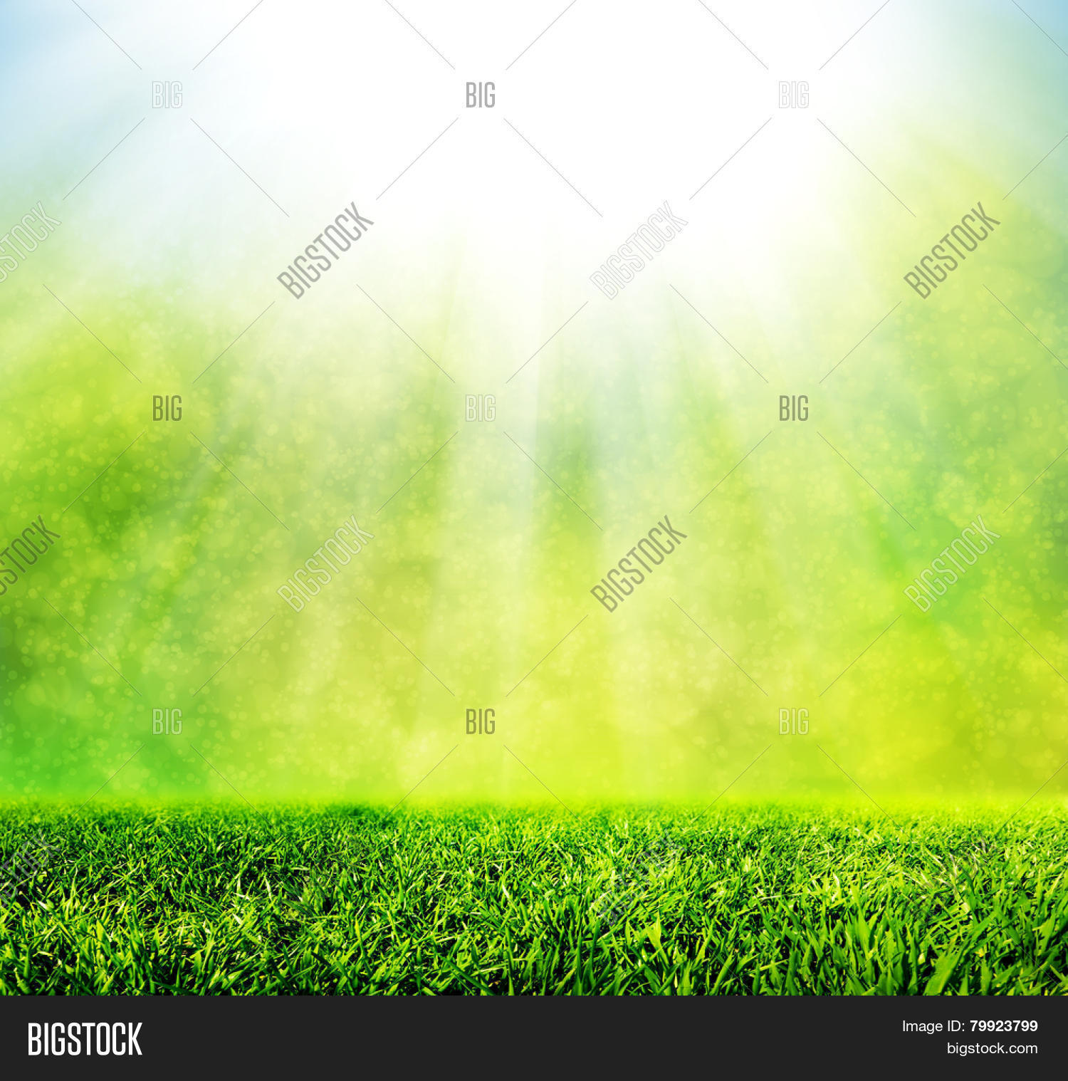 Green Spring Grass Image Photo Free Trial Bigstock