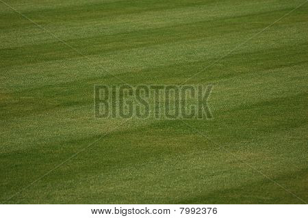Baseball Outfield Grass