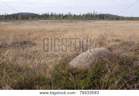 Anthill on a bog, morass.
