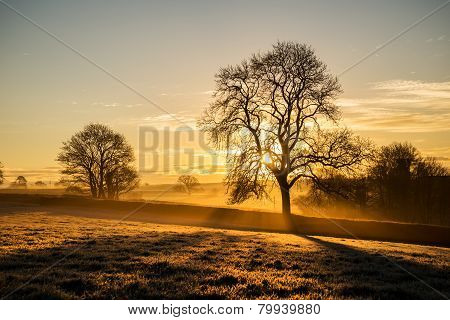 Sunrise in the fields at pengover green, cornwall, uk