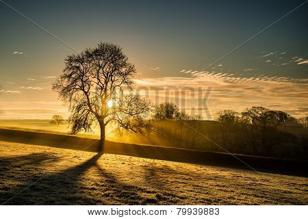 Frosty golden sunrise in fields with tree silhouette, Cornwall, UK