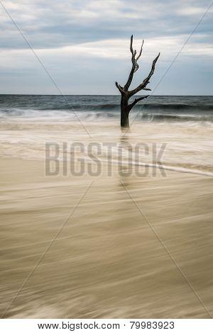 Hunting Island Skeleton Tree