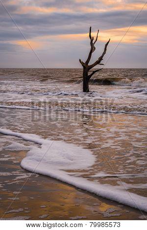 Hunting Island Skeleton Tree 2
