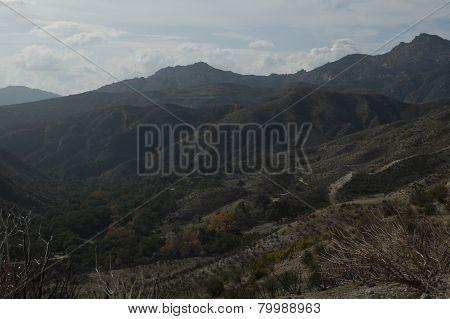 burnt trees and mountainous landscape