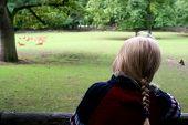 Little girl looking at deer. Zoo. Nuremberg. poster