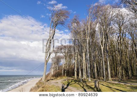 Ghost Forest On The Baltic Sea