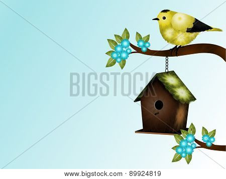 Yellow and Black Bird and Birdhouse Background