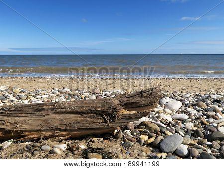 Driftwood On Stoney Beach