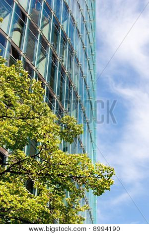 Tree and glassy building