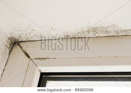 Mold near a window in the house
