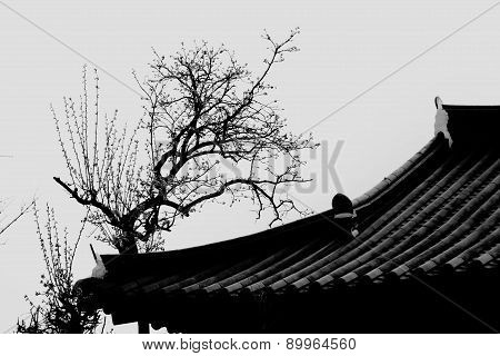 Korean Hanok roof in Black and white