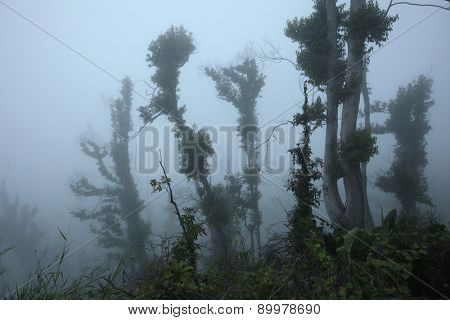 Tropical forest destroyed by volcanic eruption on the slopes of Mount Merapi (2,930 m) in Central Java, Indonesia.