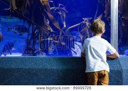 Young man looking at fish and algae tank at the aquarium
