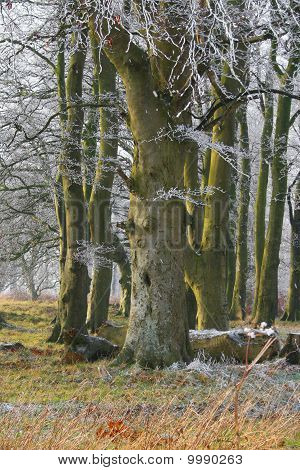 Very Cold Tree With Face Shouting Ooh!