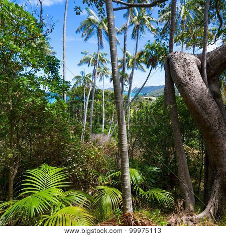 Tropical Forest on Lord Howe Island
