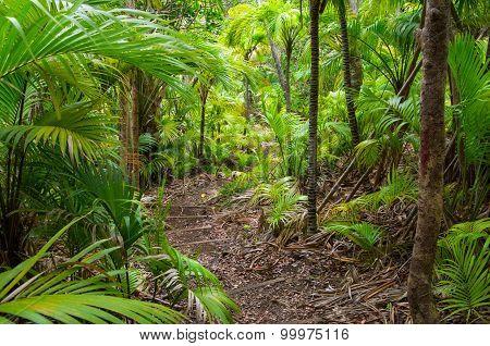 Path through Palm Forest