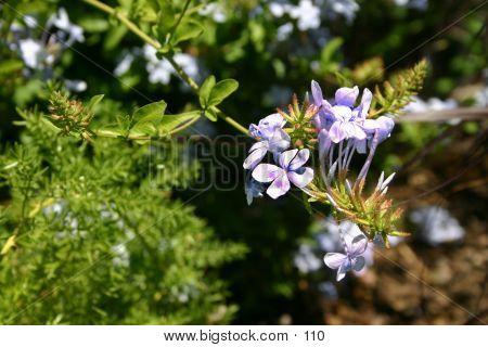 Flowers Close Up2