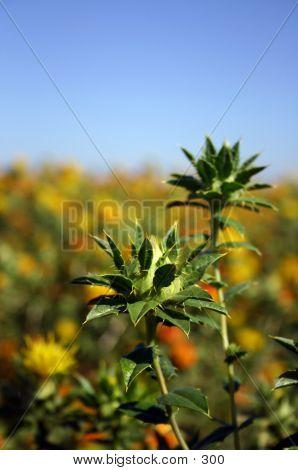 Green Prickly Flower