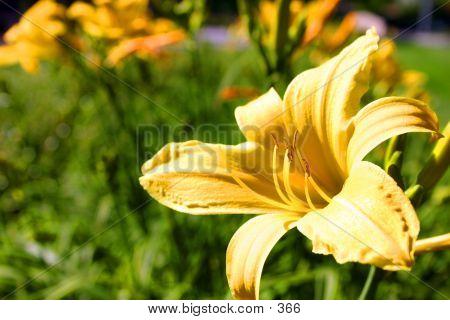 Yellow Flower Beauty