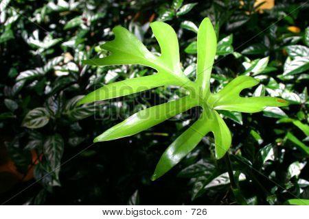 Rainforest Fern Leaf