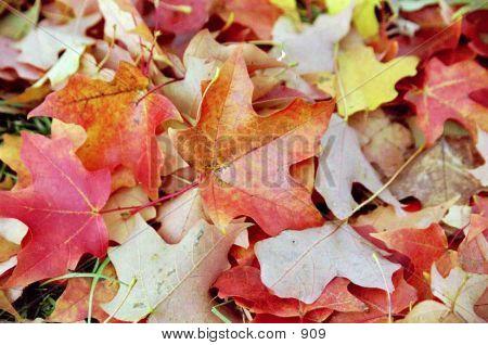 Colorful Leaf Arrangement