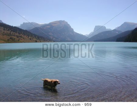 Wyoming - Dog In Water