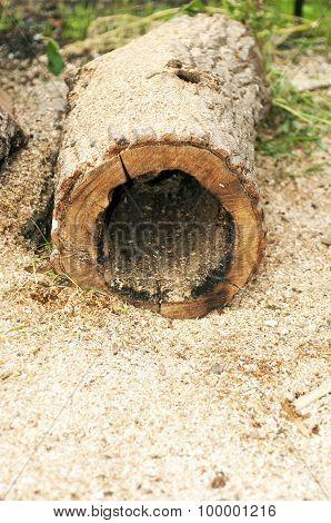 Hollow Tree Lying In The Sawdust