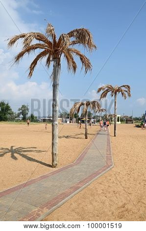 Palms Along The Track On The City Beach In Kerch