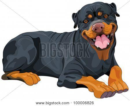 Illustration of beautiful Rottweiler