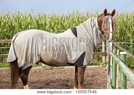 Horse with eczema blanket
