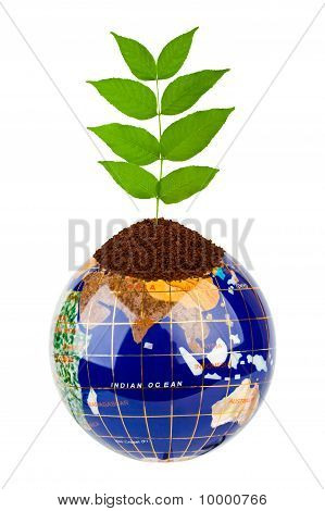 Globo y planta