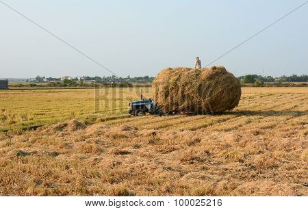 Farmers Carry Straw To Their Home