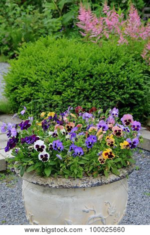 Beautiful stone urn with pansies