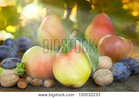 Autumn fruit under the light