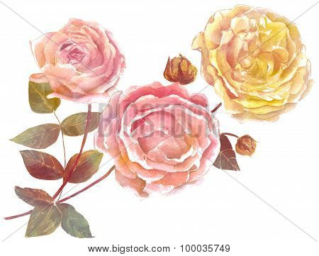 A vintage style watercolour drawing of pink and yellow roses on white background, tender toned