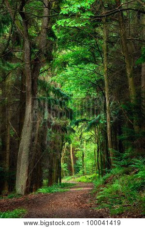 Dreamy Scenery In The Forest