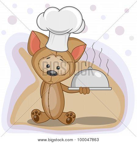 Cook Puppy