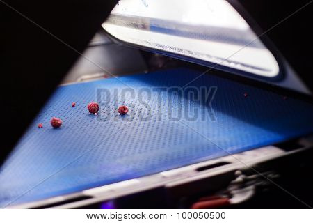 Frozen Raspberry Processing Business