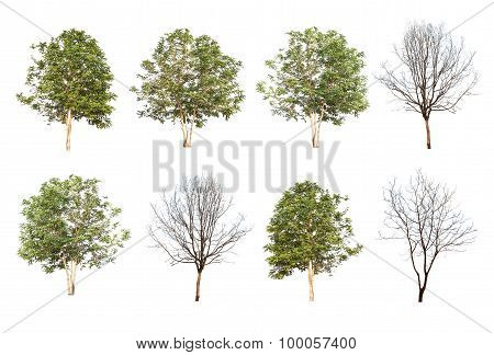Set Of Eight Green Trees And Dead Trees Isolated On White Background