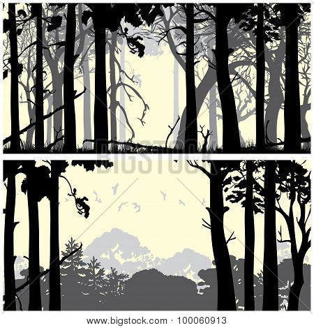 Wild coniferous forest