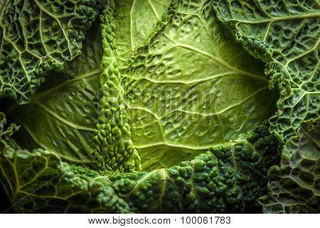Savoy Cabbage Close Up.