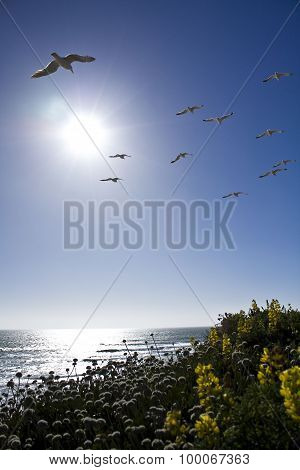 Seagulls Flying Over the Beach on a Beautiful Day