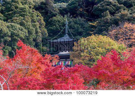 Eikando Temple, Colorful Autumn Leaf Season In Japan