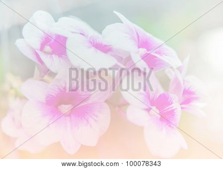 Abstract Blurry Of Orchid Flower And Colorful Background.
