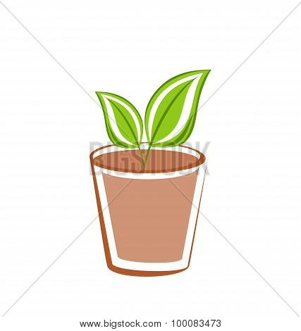 Flowerpot with green leafs plants