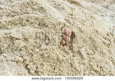 Children Toe In The Sand