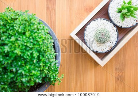 Green trees and cactus in a pot on a wooden table composition is very beautiful vintage style